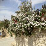 Welcome to Paradise – Matala und Sivas – Ende April 2018
