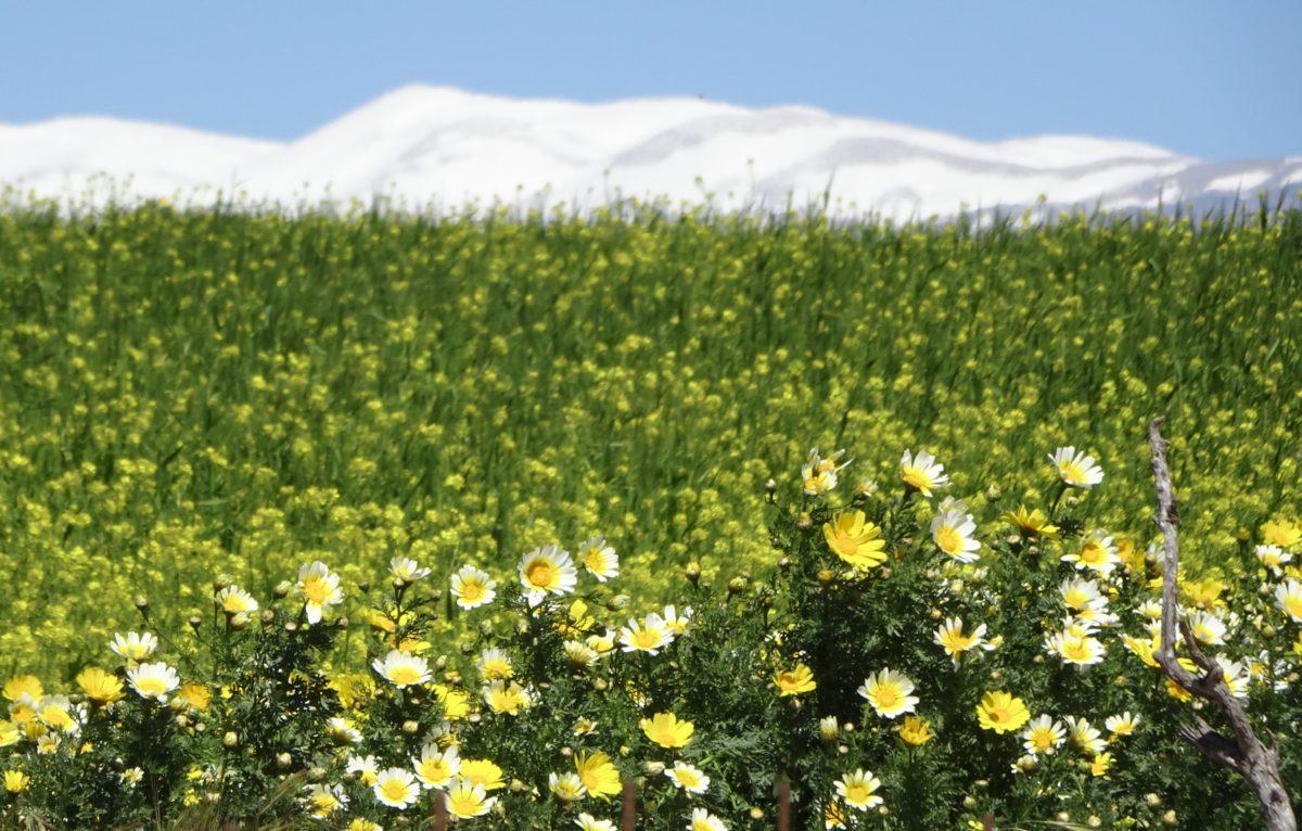 Kreta – Vorsaison 2020 – Landhausbesitzer auf Zeit